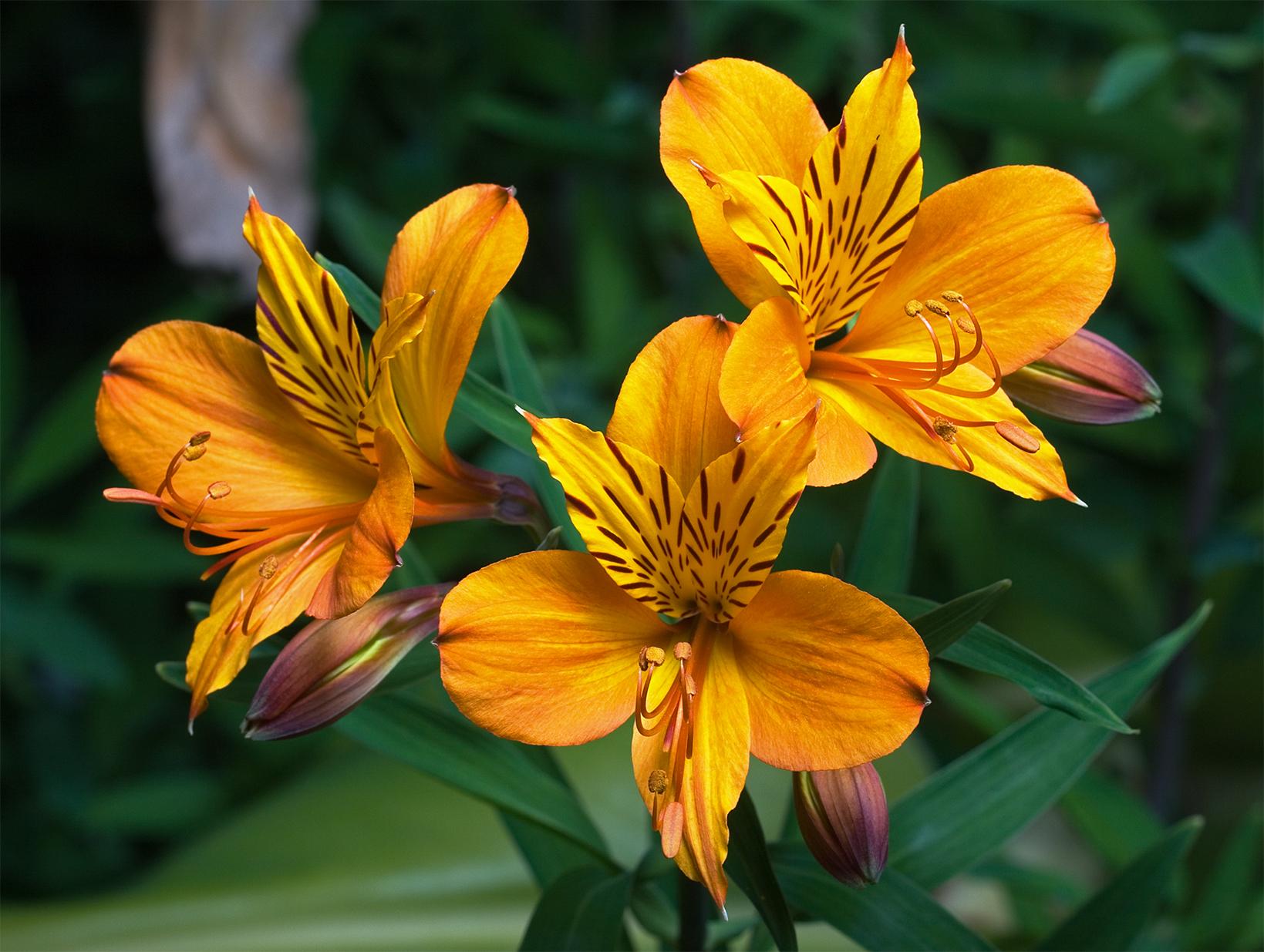 fiori per matrimonio estivo